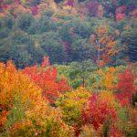 Foliage-Free-Nature-Stock