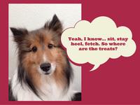 Dog Training Keywords